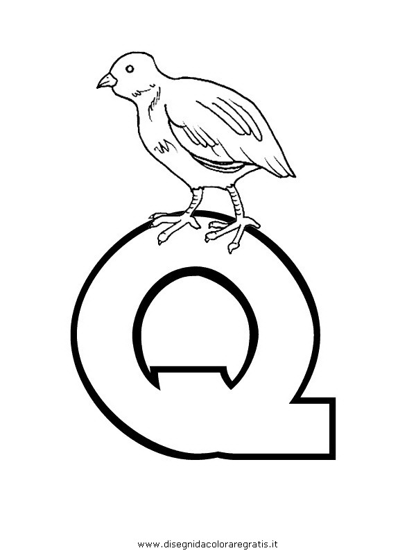 alfabeto/lettere/alfabeto_quaglia.JPG