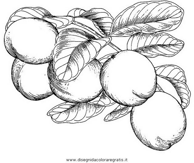 alimenti/frutta/_noce_cocco.JPG