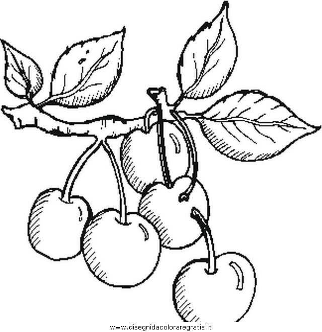 alimenti/frutta/cherries_ciliege.JPG