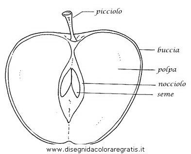 alimenti/frutta/mela.JPG