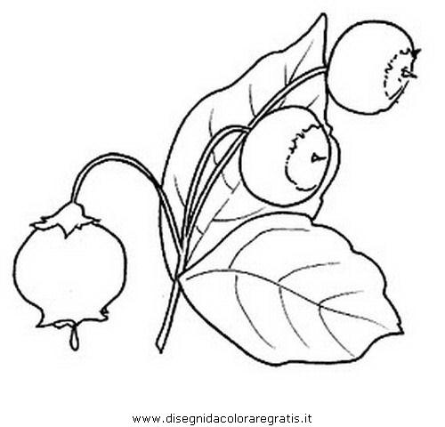 alimenti/frutta/mirtillo.JPG