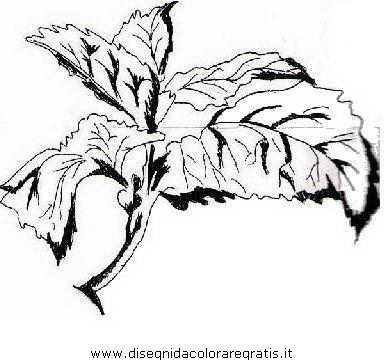 alimenti/verdura/basilico_01.JPG