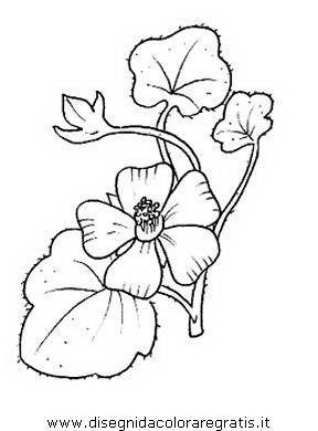 Disegno malva alimenti da colorare for Salvia da colorare