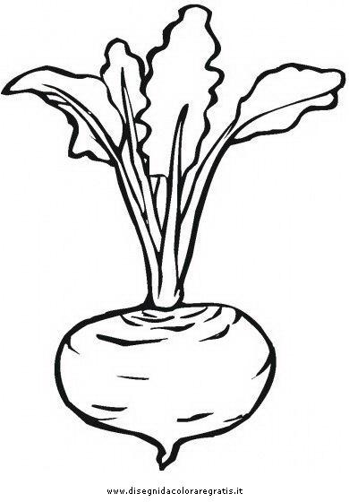 alimenti/verdura/rapanello.JPG