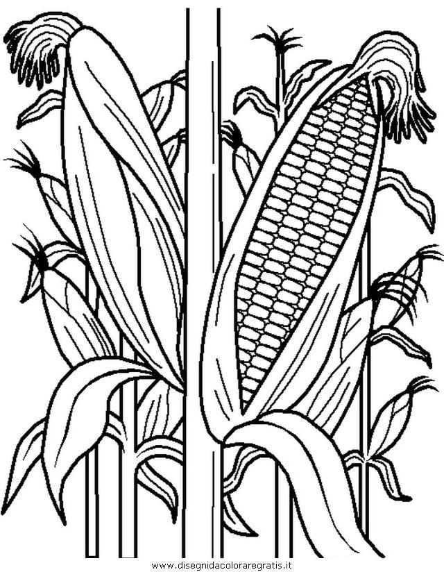 alimenti/verdura/verdura_42.JPG
