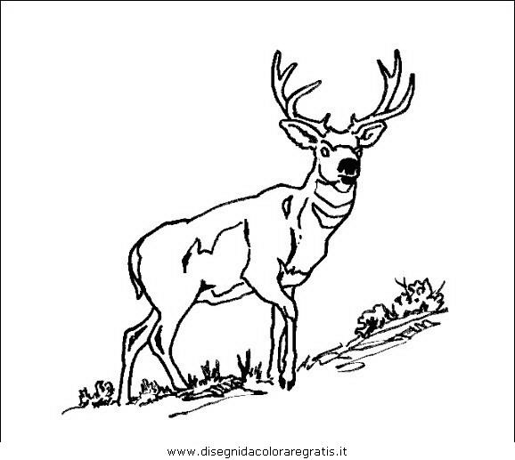 animali/animalimisti/alce45.JPG