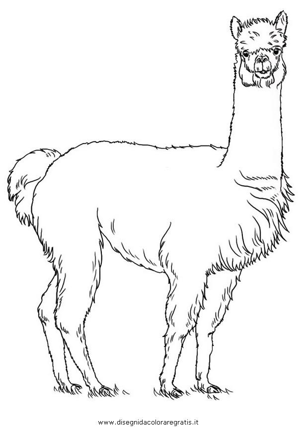 animali/animalimisti/alpaca.JPG