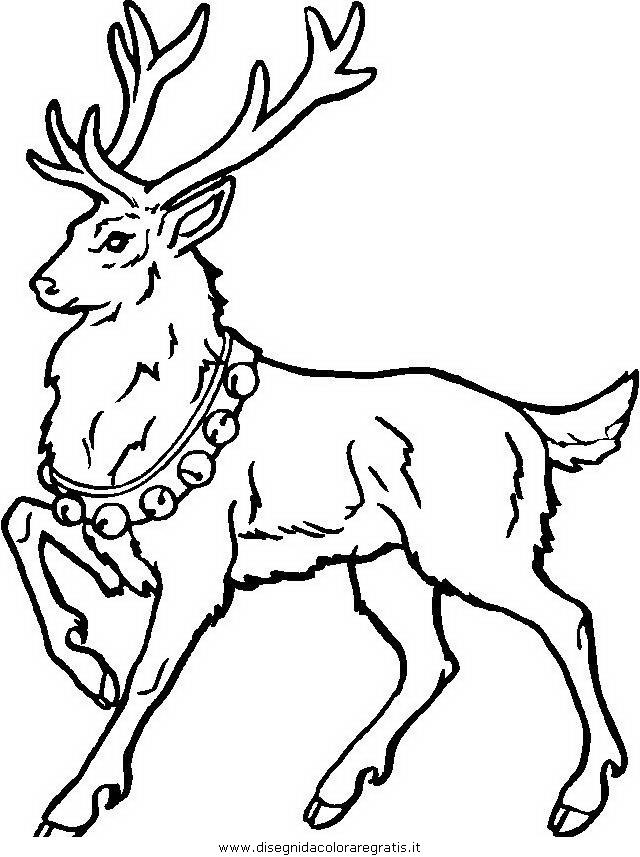 animali/animalimisti/animali_cervo_208.JPG