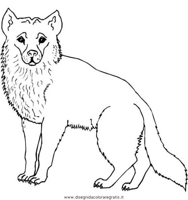 animali/animalimisti/animali_misti_004.JPG