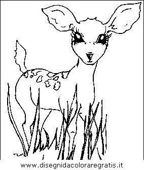 animali/animalimisti/animali_misti_107.JPG