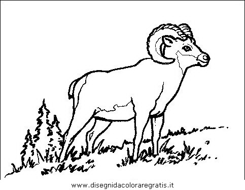 animali/animalimisti/animali_misti_124.JPG