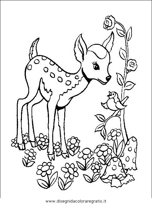 animali/animalimisti/animali_misti_136.JPG