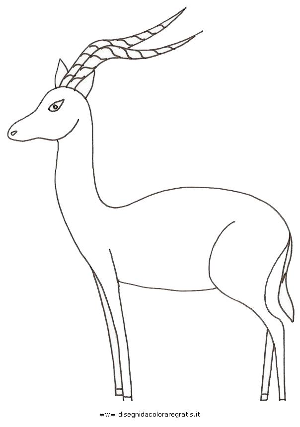 animali/animalimisti/antilope_impala2.JPG