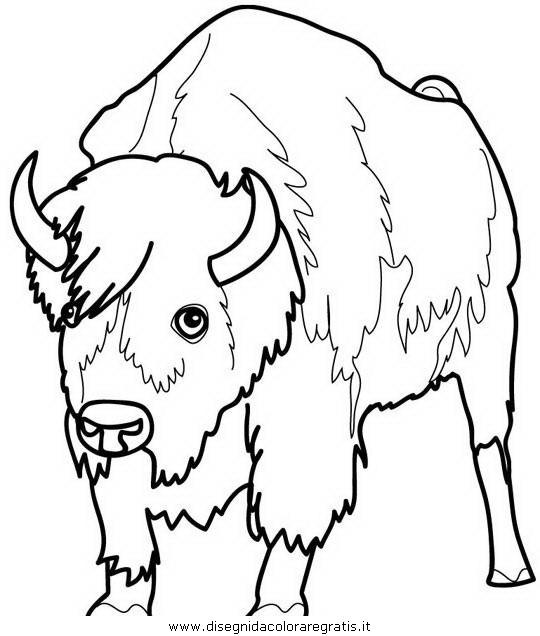 animali/animalimisti/bisonte_bisonti_35.JPG