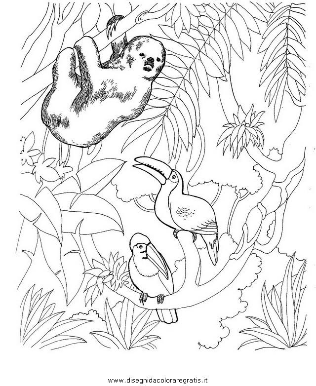 animali/animalimisti/bradipo_04.JPG