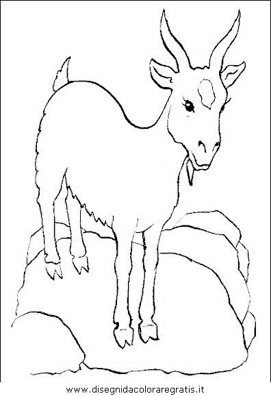 animali/animalimisti/capra34.JPG