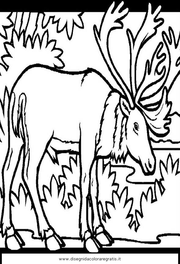 animali/animalimisti/caribu_2.JPG