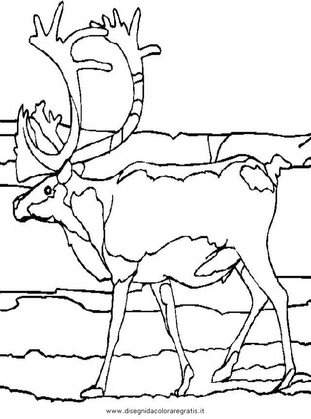 animali/animalimisti/caribu_3.JPG
