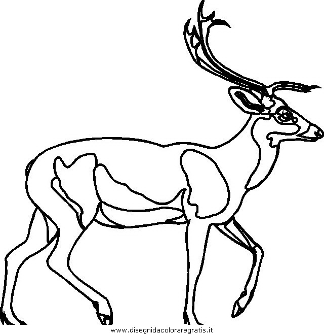 animali/animalimisti/cervo44.JPG