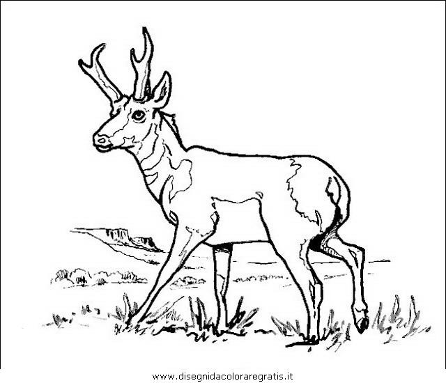 animali/animalimisti/cervo45.JPG