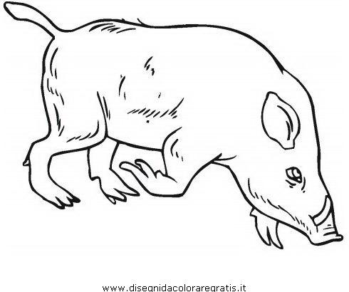 animali/animalimisti/cinghiale_cinghiali_01.JPG