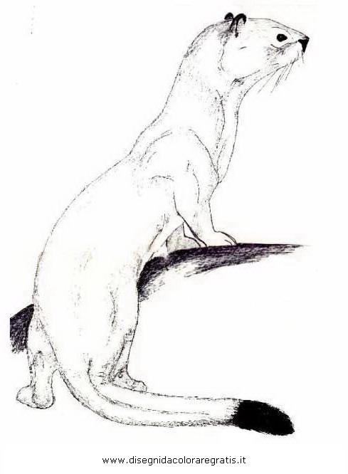 animali/animalimisti/ermellino_01.JPG