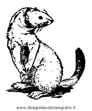 animali/animalimisti/ermellino_02.JPG