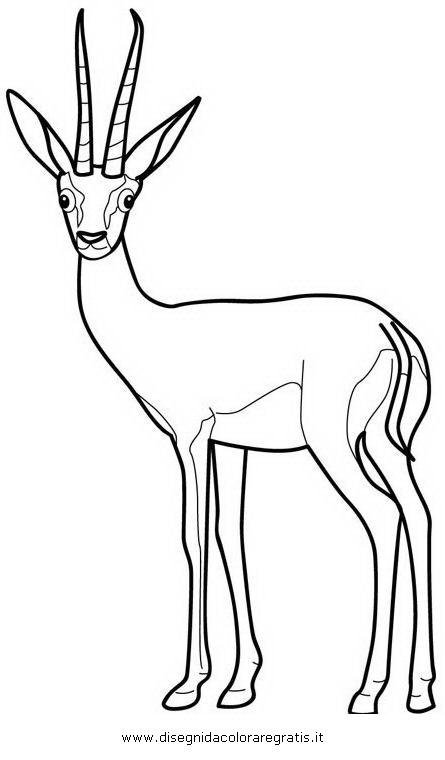 animali/animalimisti/gazzella_01.JPG