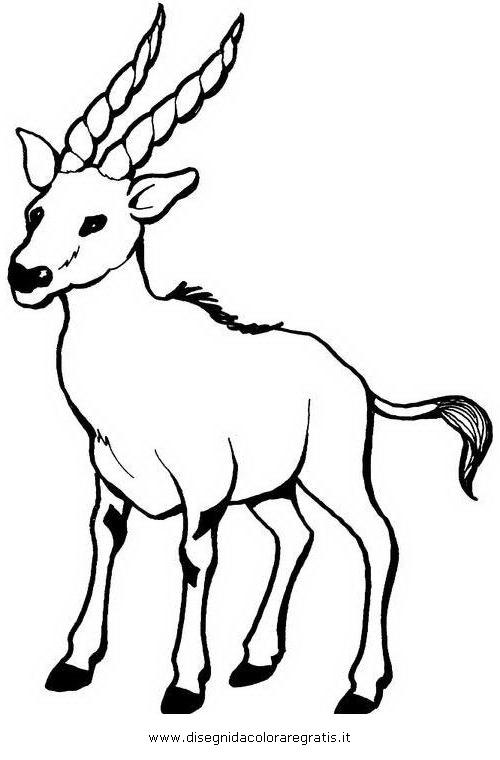 animali/animalimisti/gazzella_02.JPG