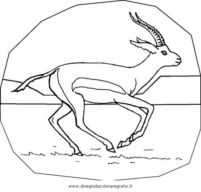 animali/animalimisti/gazzella_03.JPG