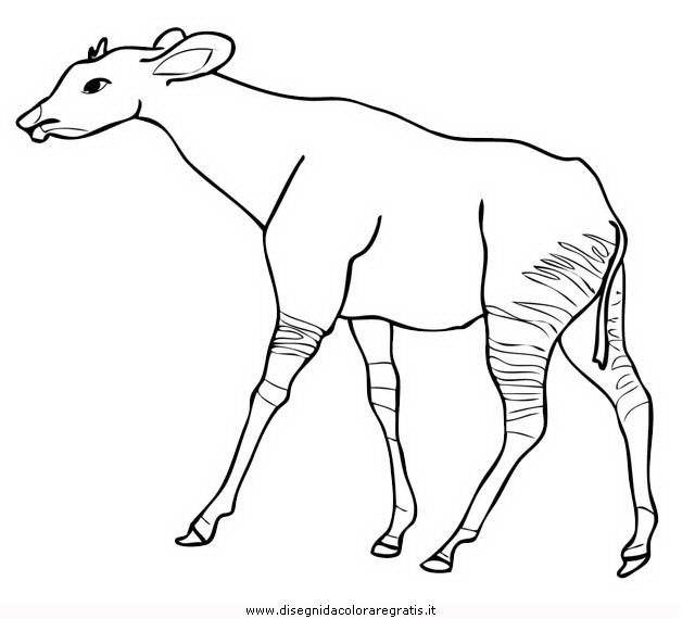 animali/animalimisti/okapi-1.JPG