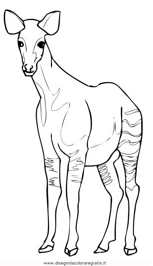animali/animalimisti/okapi-3.JPG