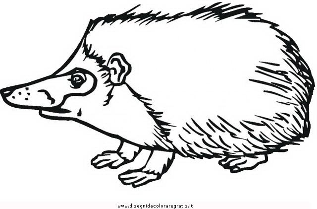 animali/animalimisti/riccio_5.JPG