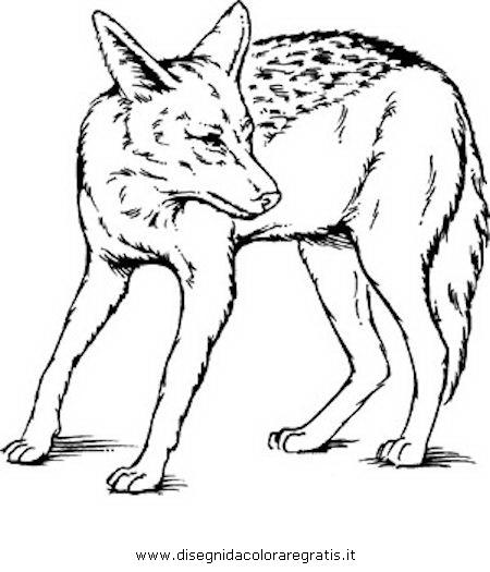 animali/animalimisti/sciacallo_03.JPG
