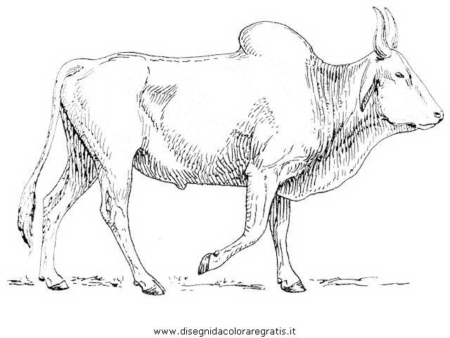 animali/animalimisti/zebu_3.JPG