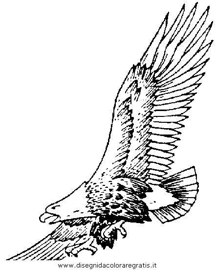 Disegno Aquilaaquile5 Animali Da Colorare