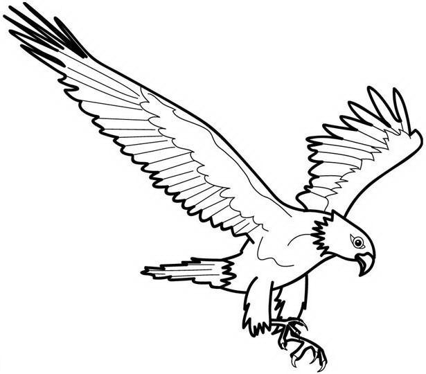 Disegno Eagleaquila Animali Da Colorare