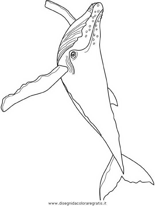 animali/balene/balena_balene_07.JPG