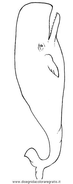 Disegno balena balene 17 animali da colorare - Balene pagine da colorare ...