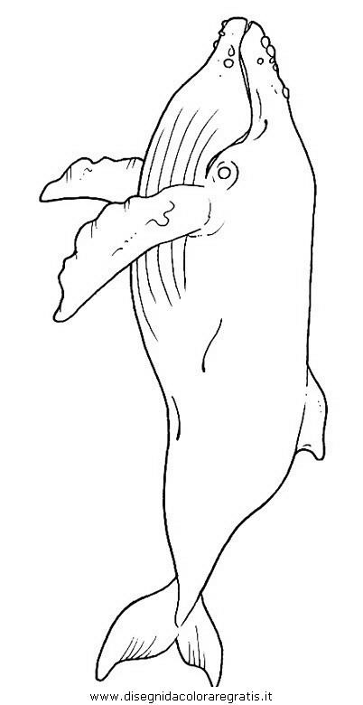 animali/balene/balena_balene_19.JPG