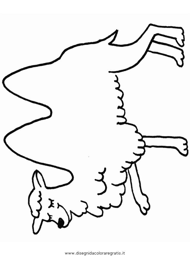 animali/cammelli/cammelli_cammello_02.JPG