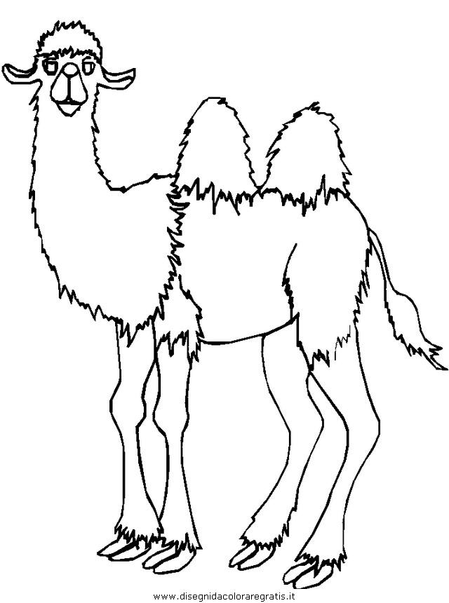 animali/cammelli/cammelli_cammello_05.JPG