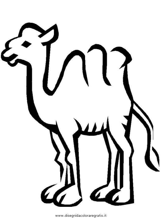 animali/cammelli/cammelli_cammello_08.JPG