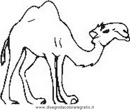 animali/cammelli/cammello44.JPG