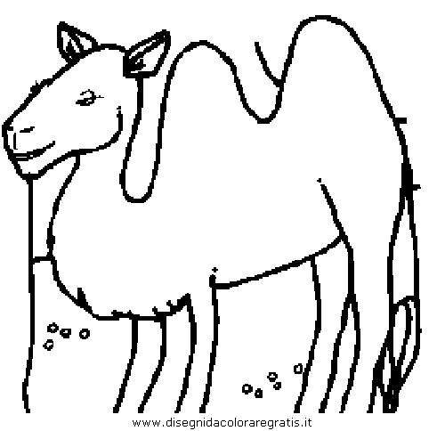 animali/cammelli/cammello_cammelli_14.JPG