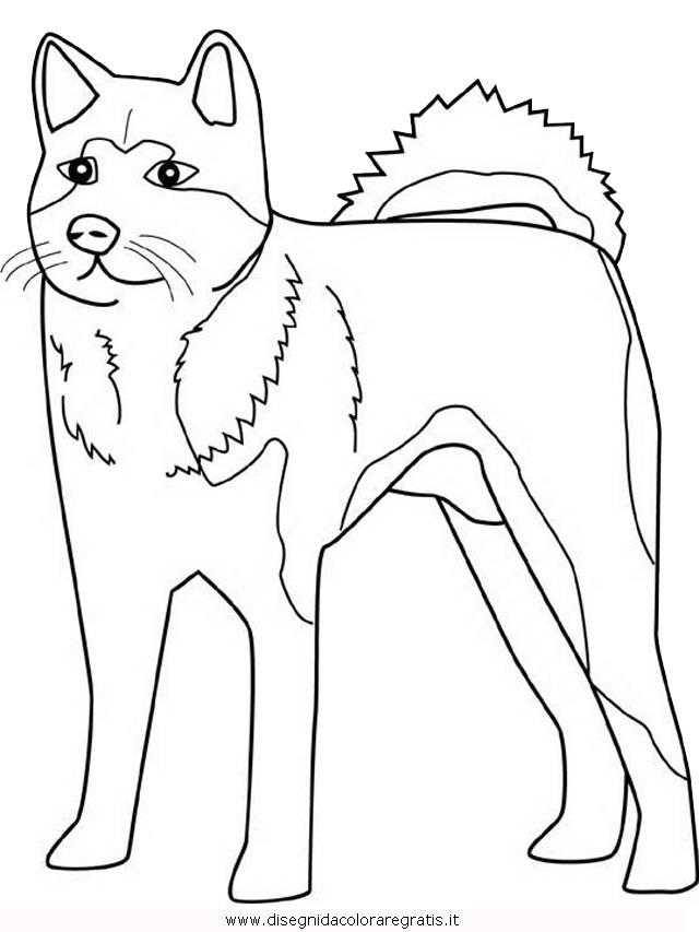 animali/cani/akita.JPG