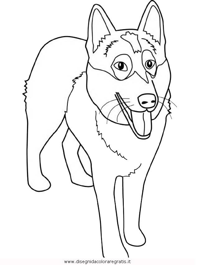 animali/cani/alaskan-malamute.JPG