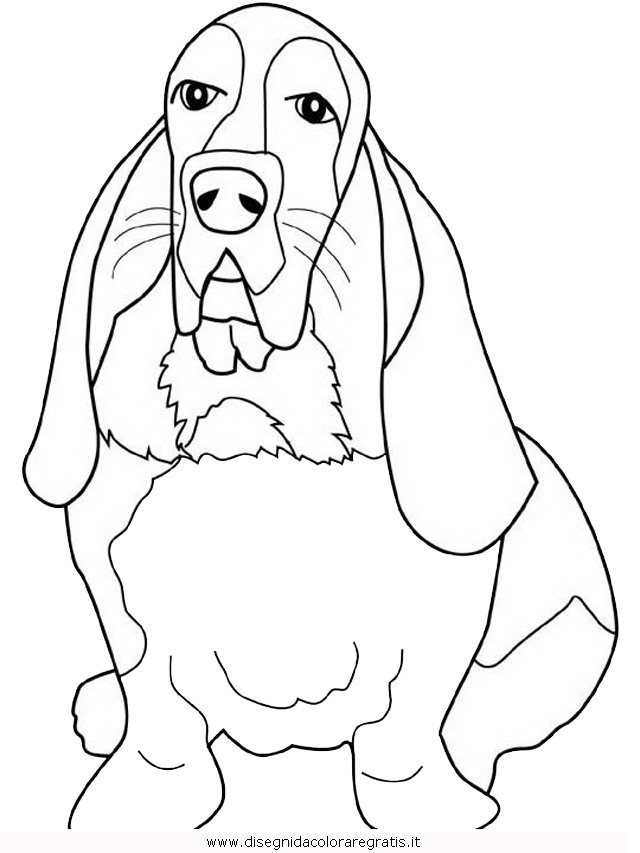 animali/cani/basset-hound.JPG