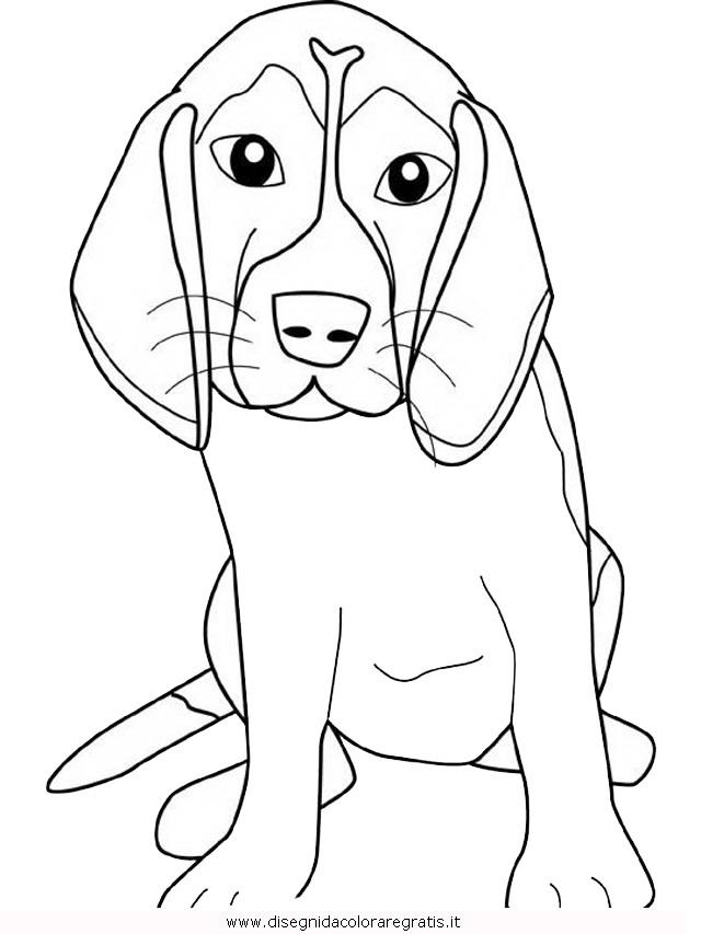 animali/cani/beagle.JPG