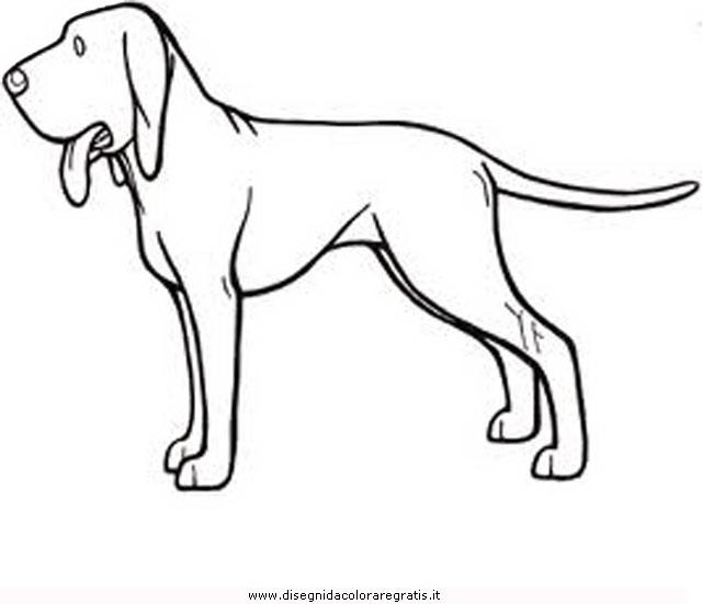 animali/cani/bracco.JPG